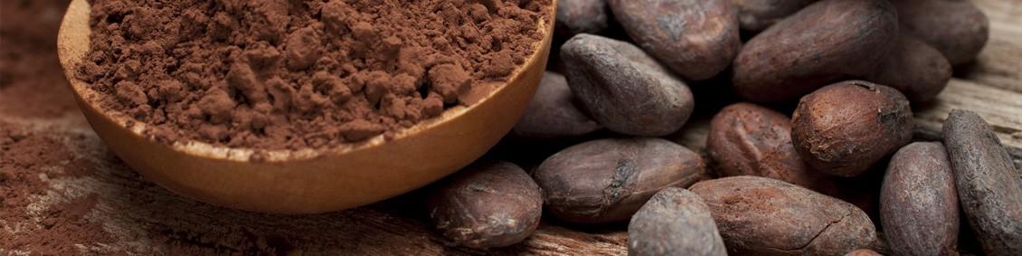 Poudre et fèves de cacao pour la fabrication du chocolat bio